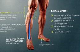 Anatomie des Fußes